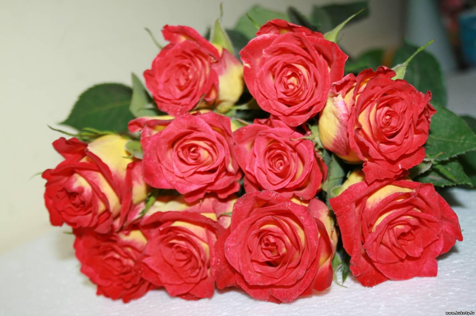 Розы Дешево